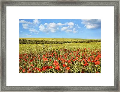 Framed Print featuring the photograph Poppy Fields by Marion McCristall