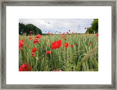 Poppy Fields Of The Czechia Framed Print by Anna Matveeva