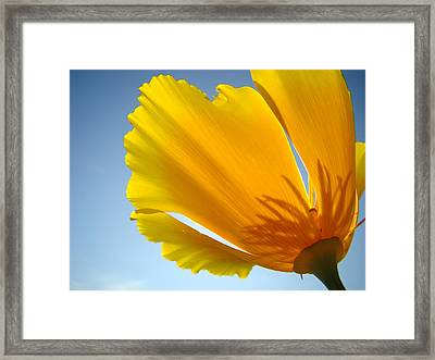 Poppy Flower Art Print Poppies 13 Botanical Floral Art Blue Sky Framed Print by Baslee Troutman