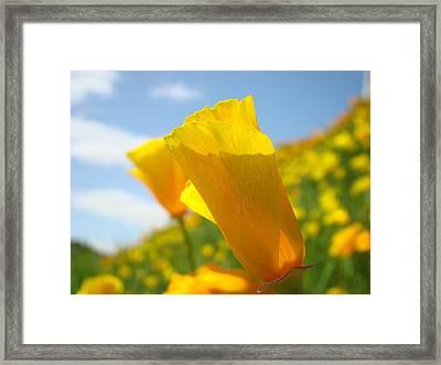 Poppy Flowers Meadow 3 Sunny Day Art Blue Sky Landscape Framed Print by Baslee Troutman