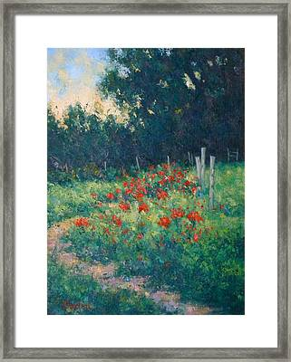 Poppy Garden Framed Print by Gene Cadore