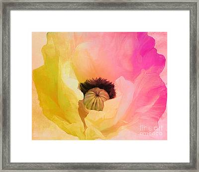 Poppy Gradient Pink Framed Print