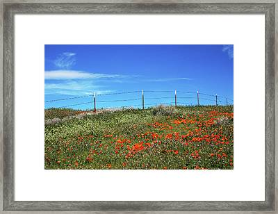Poppy Hill- Art By Linda Woods Framed Print