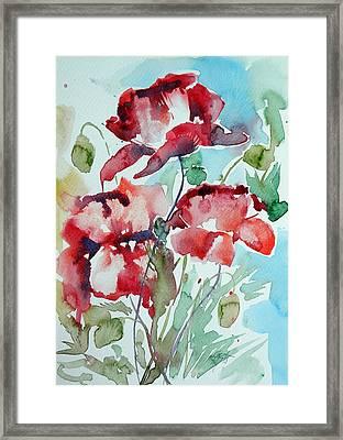 Poppy II Framed Print by Kovacs Anna Brigitta