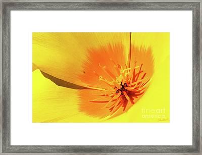 Poppy Impact Framed Print