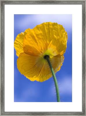 Poppy In The Sky Framed Print by Kathy Yates