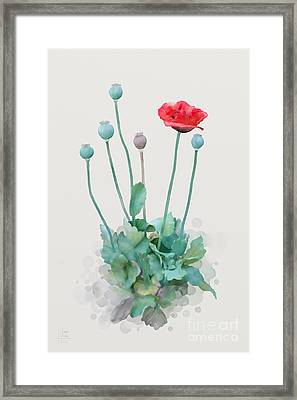 Poppy Framed Print by Ivana Westin
