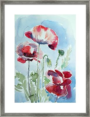 Poppy Framed Print by Kovacs Anna Brigitta