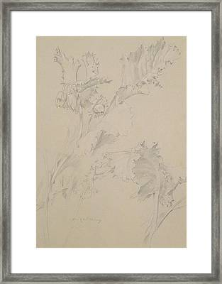 Poppy Leaves Framed Print