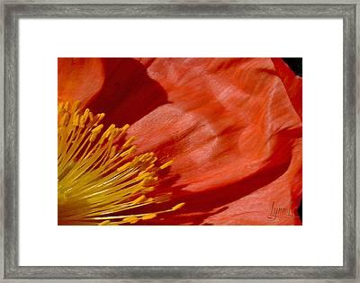 Poppy Love Framed Print by S Lynn Lehman