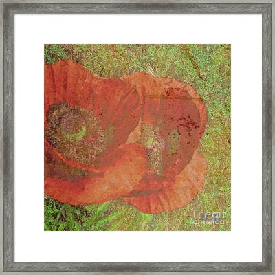 Framed Print featuring the photograph Poppy Love by Traci Cottingham