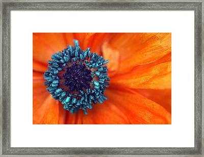 Poppy Macro Framed Print