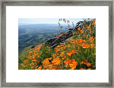 Poppy Mountain  Framed Print