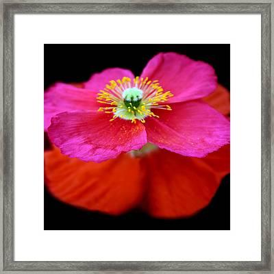 Poppy Petticoat Framed Print by Jessica Jenney
