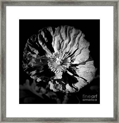 Poppy Portrait Monochrome Framed Print