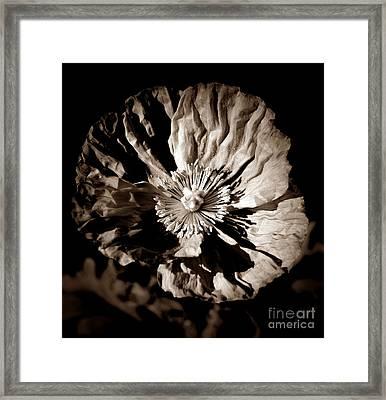 Poppy Portrait Sepia Framed Print