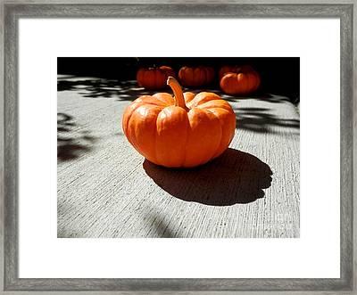 Poppy Pumpkin Framed Print
