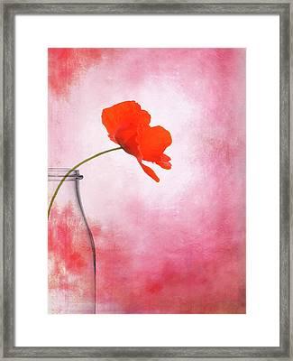 Poppy Red Framed Print