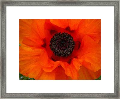 Framed Print featuring the painting Poppy by Renate Nadi Wesley