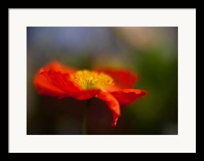 Radiant Flower Framed Prints
