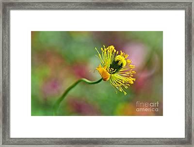 Poppy Seed Capsule Framed Print by Kaye Menner