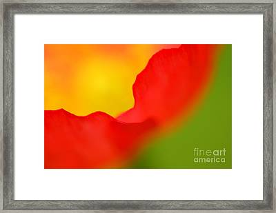 Poppy Framed Print by Silke Magino