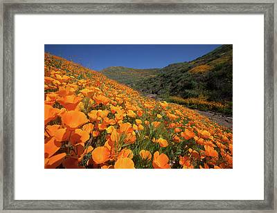 Framed Print featuring the photograph Poppy Superbloom by Cliff Wassmann