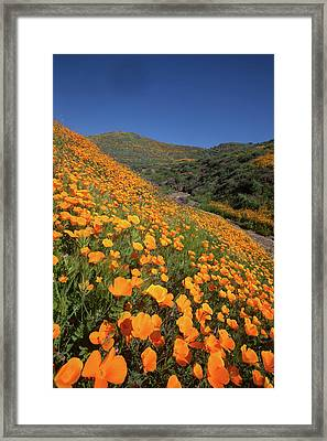 Framed Print featuring the photograph Poppy Superbloom Vertical by Cliff Wassmann