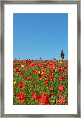 Poppy Triptych Panel 1 Framed Print by Terri Waters