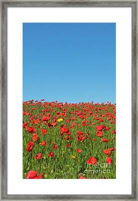 Poppy Triptych Panel 2 Framed Print by Terri Waters