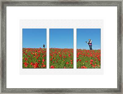 Poppy Triptych Framed Print by Terri Waters