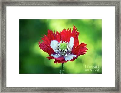 Poppy Victoria Cross Framed Print by Tim Gainey