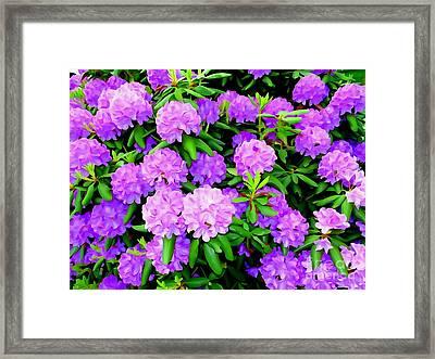 Pops Of Purple Framed Print