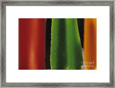 Popsicles Melting Framed Print by Jim Corwin