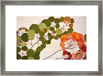 Populus Tremula Or European Aspen Framed Print