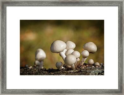 Porcelain Fungus Framed Print by Jane Rix