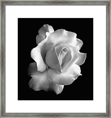 Porcelain Rose Flower Black And White Framed Print