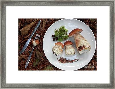 Porcini Mushrooms Framed Print by Masako Metz