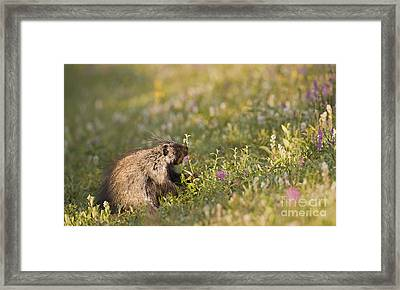 Porcupine In Flowers Framed Print by Tim Grams