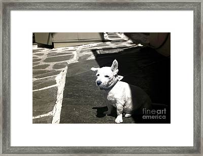 Porkchop In The Shadows Infrared Framed Print