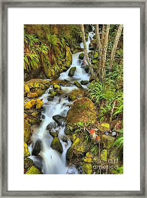 Port Alice Rainforest Falls Framed Print by Adam Jewell