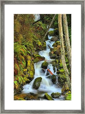 Port Alice Waterfall Framed Print by Adam Jewell