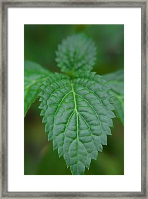 Porterweed Framed Print by Aimee L Maher Photography and Art Visit ALMGallerydotcom