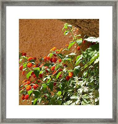 Portofino Flowers Framed Print by Corinne Rhode