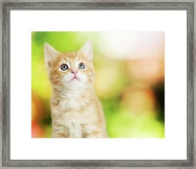 Portrait Cute Kitten Blurred Scenic Background Framed Print
