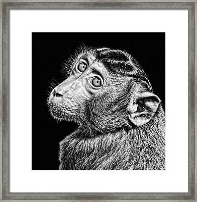 Portrait Of A Baby Monkey II Black And White Version Framed Print by Jim Fitzpatrick