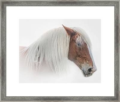 Portrait Of A Belgian Horse Framed Print by David and Carol Kelly
