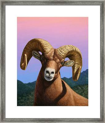 Portrait Of A Bighorn Framed Print by James W Johnson