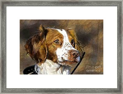 Framed Print featuring the photograph Portrait Of A Brittany - D009983-a by Daniel Dempster