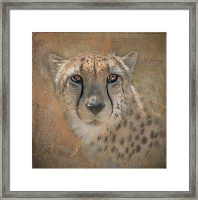 Portrait Of A Cheetah Framed Print